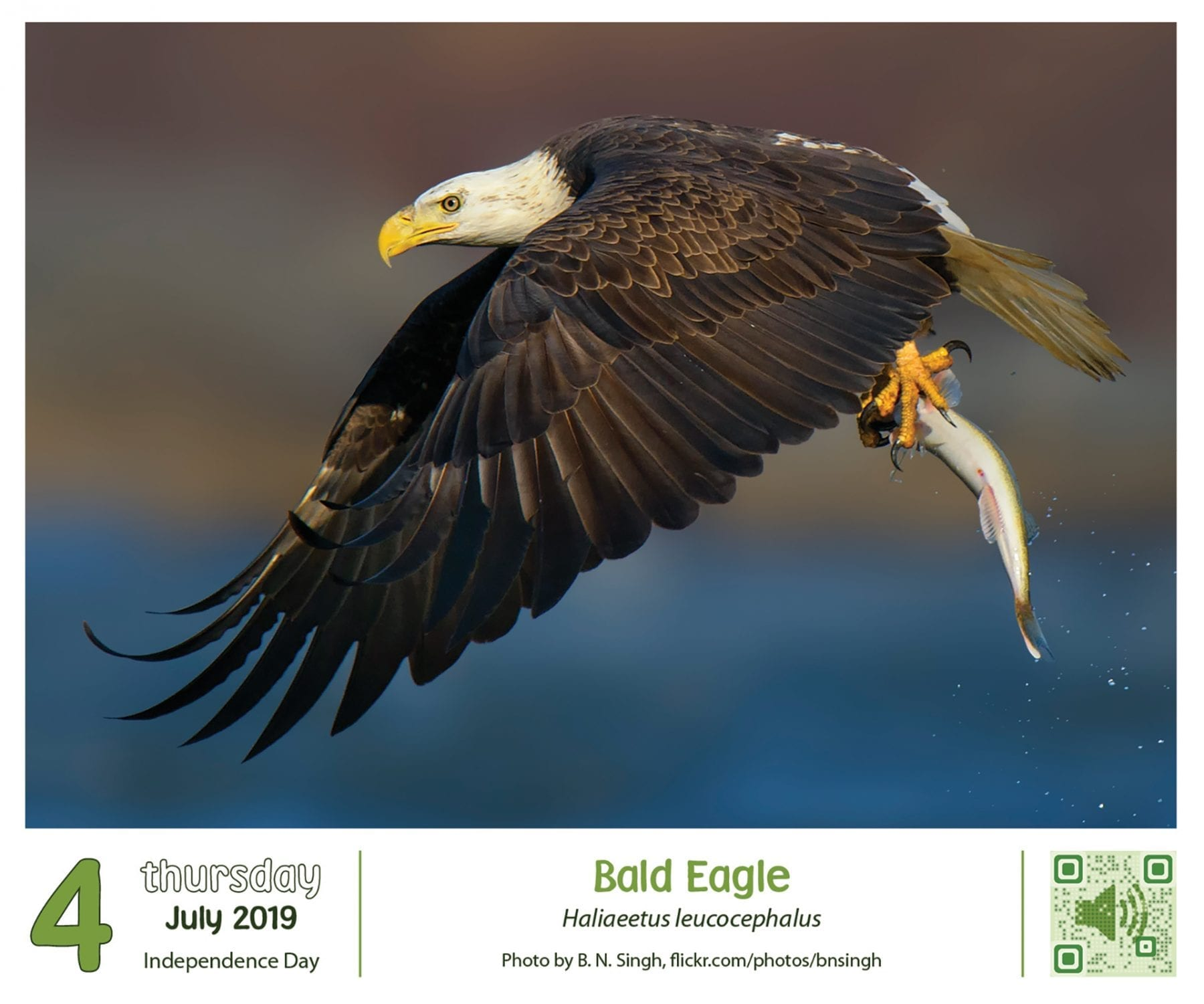 bird a day 2019 desk calendar