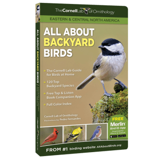 All About Backyard Birds Eastern Central