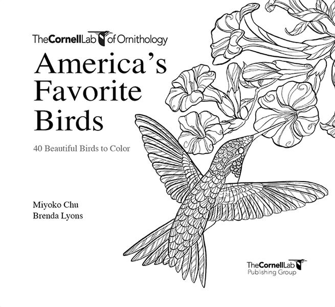 Americas Favorite Birds 40 To Color