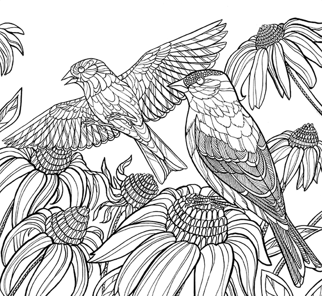 types of birds coloring pages - photo#14