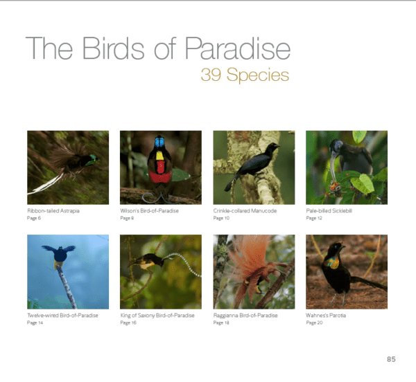 Birds of Paradise: A Coloring Expedition