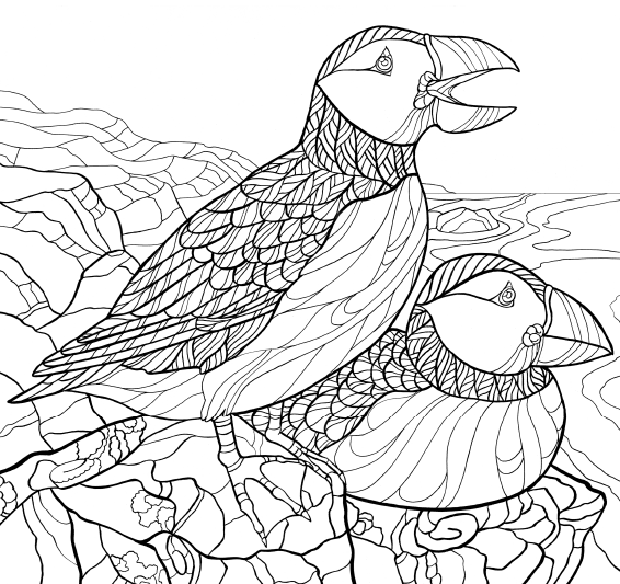 America S Favorite Birds Coloring Page Downloads Cornell