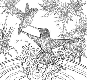 Black Chinned Hummingbirds And Bee Balm