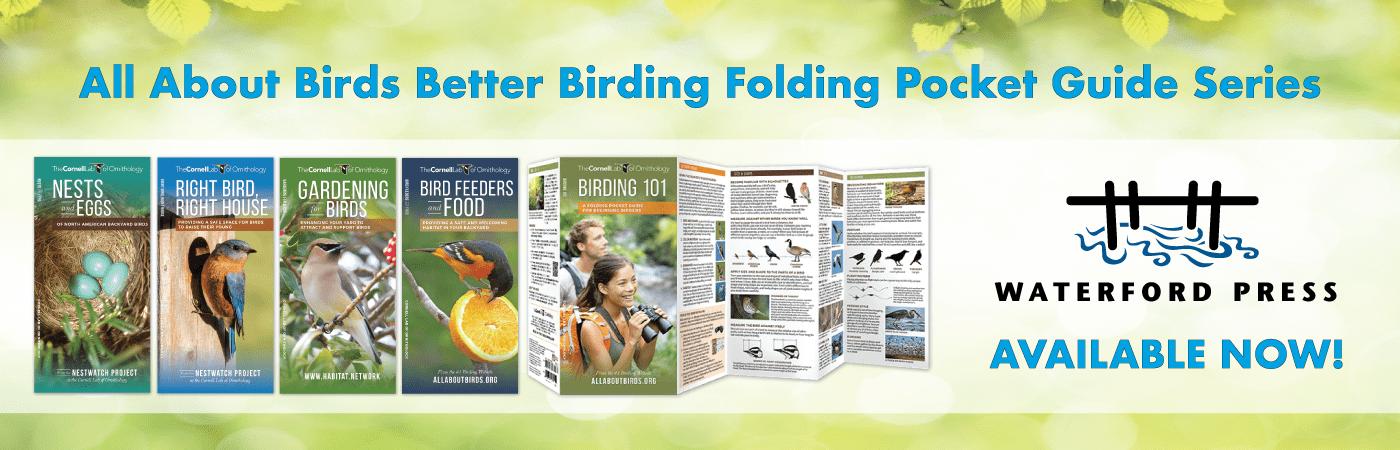 promo-slider_SPRING17-BetterBirdingGuidesNEW-1